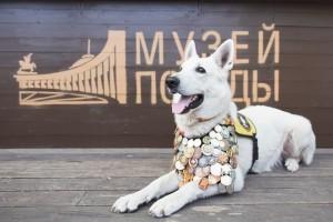 Жителям Самарской области предложили нарисовать собак-героев времен войны