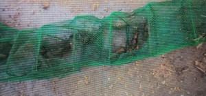 Житель Волжского района ответит за незаконную ловлю раков