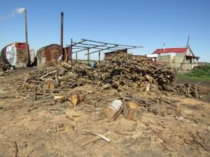 Была произведена незаконная сплошная рубка порядка 600 сырорастущих кленов и вязов.