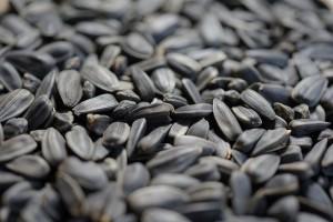 Для изготовления приманки для борьбы с грызунами были получены семена подсолнечника и ядовитое вещество на основе «кумарина».