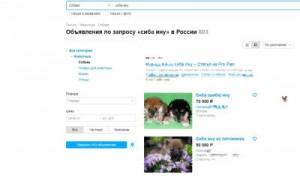Самарские полицейские задержали жителя города Сочи, продававшего виртуальных щенков Сиба-ину