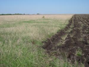 В текущем году перед региональным агропромышленным комплексом поставлена задача ввести в оборот 16 тыс. га неиспользуемых земель сельхозназначения.
