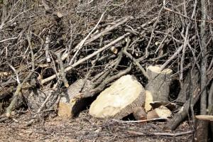 Житель Самарской области незаконно вырубил 29 деревьев
