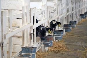 Новый инвестор планирует реализовать в Самарской области проект в сфере животноводства