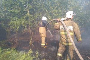 Глава Тольятти: причиной лесного пожара мог быть поджог