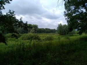 В Тольятти усилят патрулирование лесов
