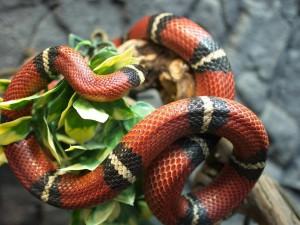"""16 июля в самарском зоопарке отметят """"Всемирный день змей"""""""