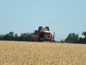 Аграрии Самарской области собрали первые полмиллиона тонн зерна