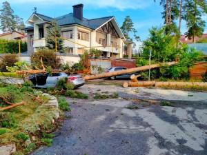 В Тольятти на автомобиль с водителем упало дерево