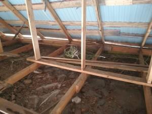 Житель Борского района хранил коноплю на чердаке