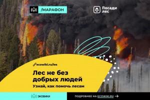 В России стартовал марафон против лесных пожаров