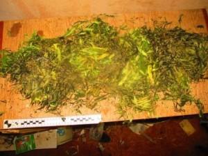 В частном доме в Ставропольском районе нашли около 300 граммов марихуаны