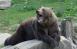 Один человек погиб.К месту нападения медведя на туристов вылетел вертолет.