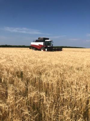 Средняя урожайность составляет 20,2 центнера с гектара.