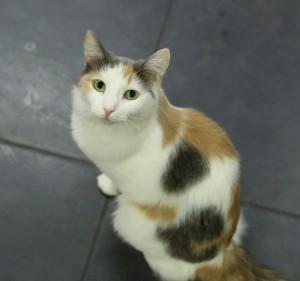 Кошки или собаки: каких питомцев предпочитают в Самаре