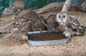 Самарский зоопарк показал, как животные переносят аномальную жару