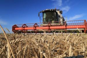 Средняя урожайность – 18,4центнера с гектара.