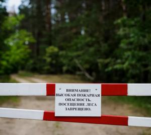 Запрет распространяется на Безенчукское, Кошкинское, Клявлинское, Шенталинское лесничества.