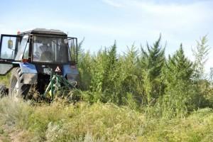 Более 500 кг конопли уничтожили в Самарской области