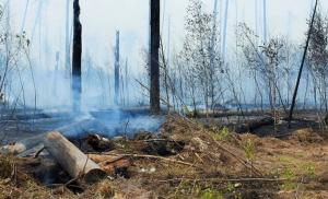 Пожаром пройдена площадь около 3000 гектаров. Активно горит на 15 гектарах.