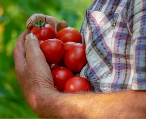 Обеспечить беспрепятственный доступ отечественных сельскохозяйственных товаропроизводителей к розничным рынкам, ярмаркам.