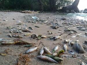 Массовая гибель рыбы в Волге продолжается в Самарской области: когда это закончится?