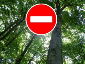 В связи с наступлением высокой пожарной опасности в лесах.