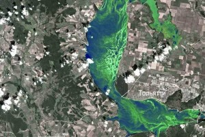 Вся Волга заполнена сине-зелеными водорослями