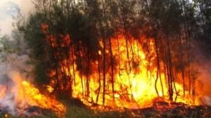 В Самарской области проводится проверка в связи с возникновением пожара в Борском районе