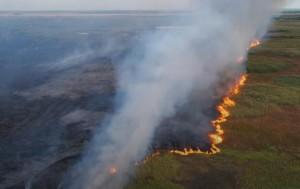 Природный пожар около Кинеля: загорелся камыш