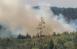 Из-за лесного пожара в Тольятти ввели режим ЧС