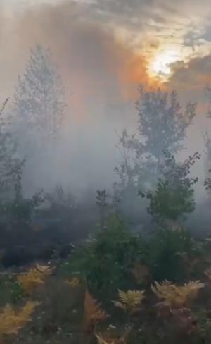 Уже сегодня утром благодаря оперативному реагированию возгорание удалось локализовать, предварительная причина пожара – поджог.