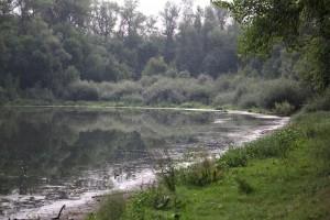 В Самарской области утвердили Стратегию сохранения биоразнообразия