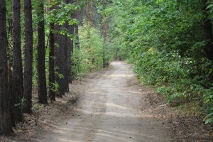 В Тольятти сформируют дополнительные отряды для патрулирования городского леса