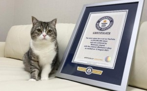 На канале публикуются видео с повседневной жизнью кота и его хозяина.