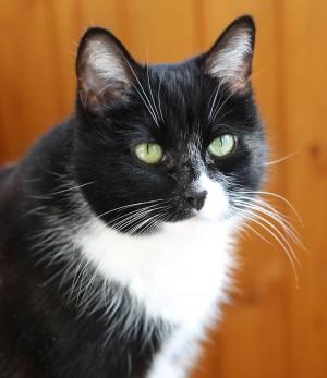 Сбер разработал уникальную систему распознавания животных