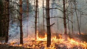 «Посади лес» собирает средства для добровольных лесных пожарных