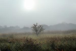 Из-за тумана в Самарской области объявлен желтый уровень опасности