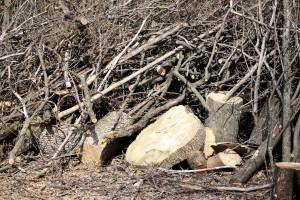 В Самарской области упавшее дерево убило рабочего