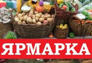 Жителей и гостей района приглашают за картофелем, овощной продукцией, которую предложат по доступным ценам товаропроизводители Приволжского района.