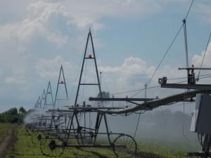 Основными направлениями государственной поддержки производителей продукции растениеводства являются субсидии на проведение агротехнологических работ.