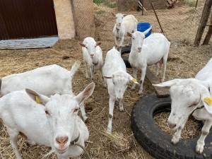По итогам двух отборочных конкурсов победителями признаны 5 глав фермерских хозяйств, занимающихся развитием животноводства, и один владелец семейного производства овощей.