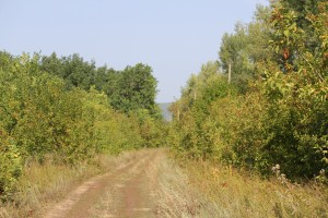 В Самарской области снова объявлена высокая  пожароопасность лесов