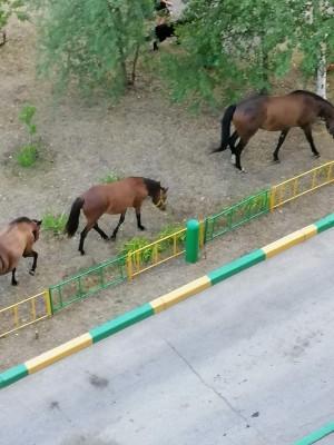 В Тольятти по улице гуляют три коня