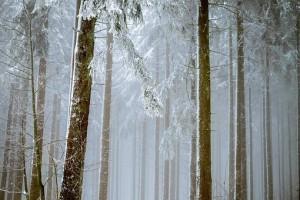 По мнению эксперта, за последнее время ученые наблюдают две климатические тенденции: глобальное потепление и постепенное ослабление Гольфстрима.