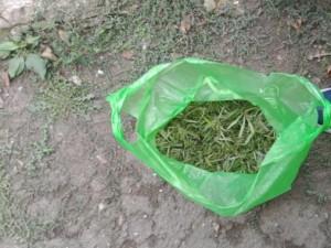 Ранее судимый житель Самарской области сушил коноплю