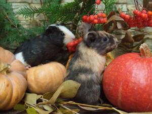 Самарский зоопарк принимает овощи в дар