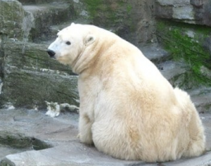 Медвежонок ищет маму.