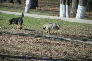 В Самаре в парке им. Гагарина замечены агрессивные стаи собак