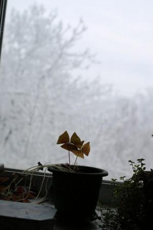 первый снег в Самарской области может выпасть в течение недели